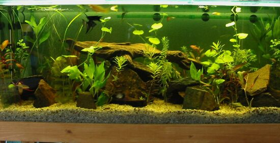 The Advantages Of Adding Driftwood To Aquariums Petsrr